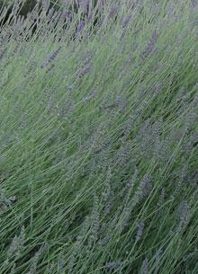 Giardino in Toscana